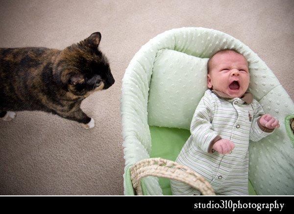 north carolina newborn photographer amanda dengler