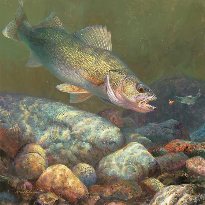 A rainx the best walleye fishing season for Walleye fishing videos