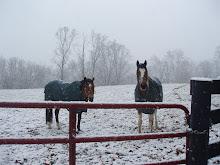 Meet The Ponies!