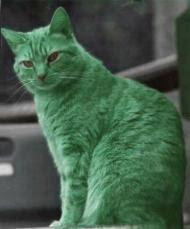 http://1.bp.blogspot.com/_vbS7BIUoZ94/SZiST1p3mhI/AAAAAAAABKE/6NVhfVax75M/S259/green+cat+02.jpg