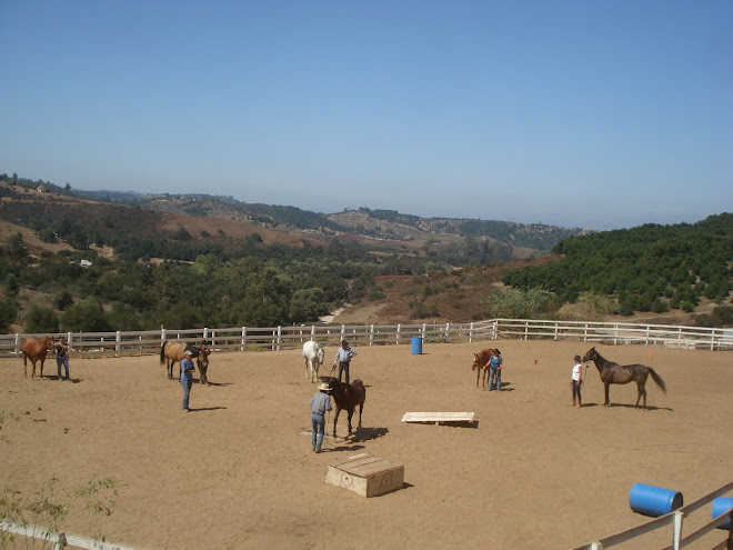Volunteer Horsemanship Class at FalconRidge
