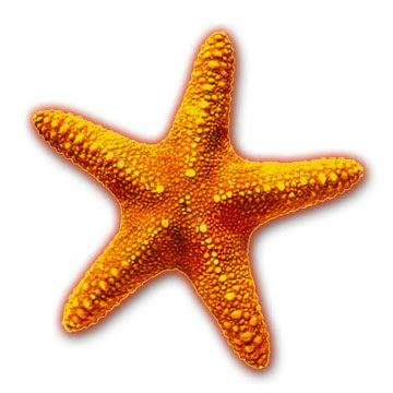 shimmering star in the cinema firmamentClipart Starfish
