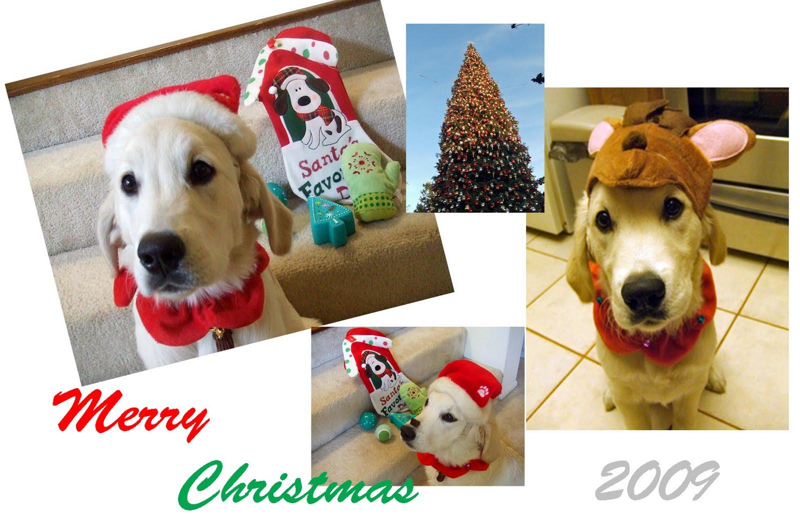[christmas+card]