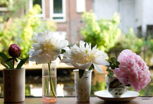vejo flores em você 4