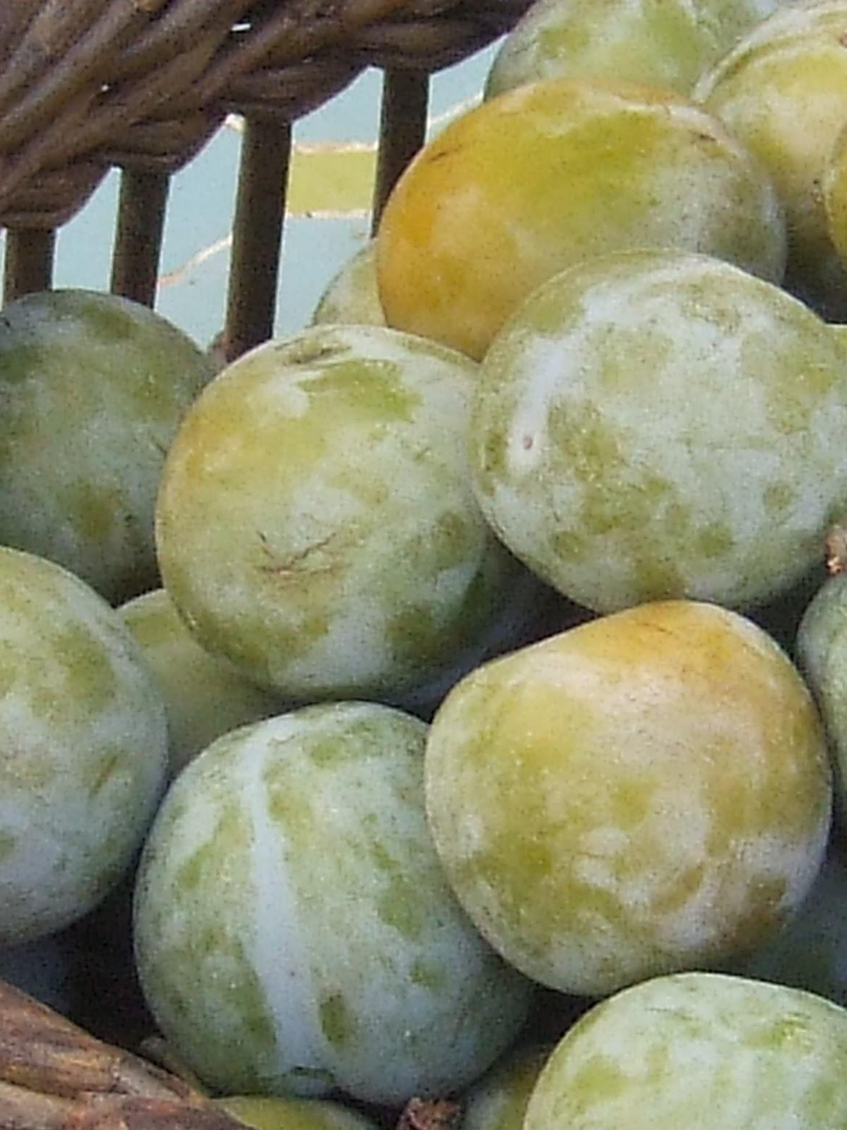 cozinheiro este algarve: Sugar plums and nuns