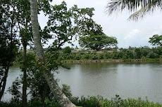 Johnston River
