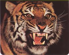 TIGER www.karatenews.com