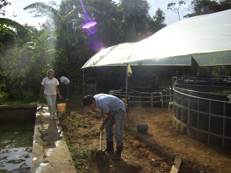 Jovenes rurales emprendedores unidad productiva de for Proyecto de piscicultura mojarra roja