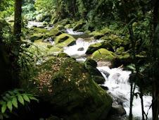 ..:: Fazenda Cabuçu, Santos (SP) ::..