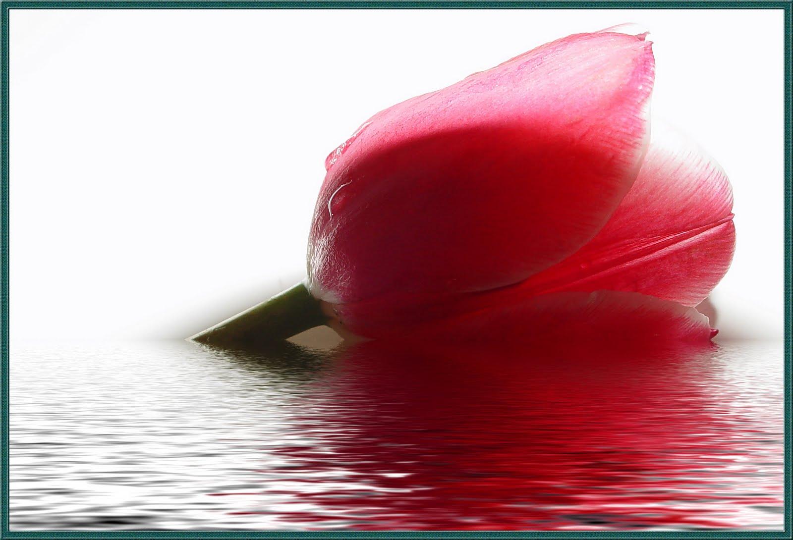 nUr iTu CaHaYa-: bunga idaman islam.....