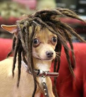 http://1.bp.blogspot.com/_vkYCO2_xAuM/SZ74p5TlZVI/AAAAAAAAA5w/Hsbj-e9Ia9s/s320/Dog+Wig.jpg