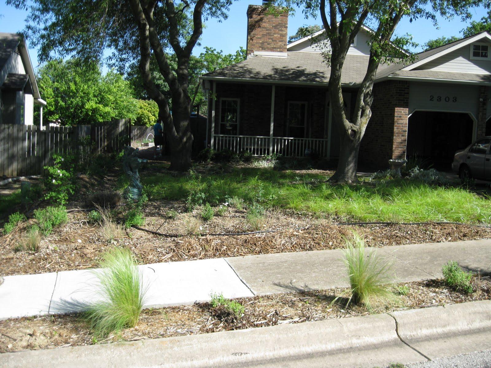 Yard Fanatic Austin Texas e Year Later