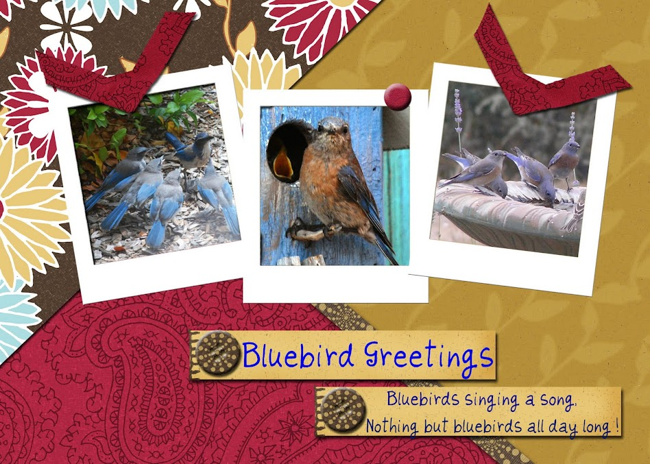 Bluebird Greetings