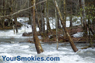 Flooding and downed trees in the Great Smoky Mountains National Park