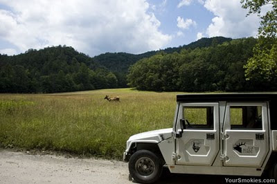 Great Smoky Mountains National Park needs volunteers for the Elk Bugle Corp Program