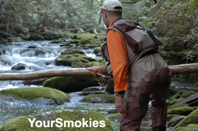 No limits on Rainbow Trout in Tremont section of Great Smoky Mountains National Park