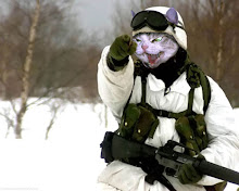Support Our Felines...send catnip