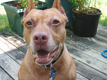 The Happy Pit Bull blog