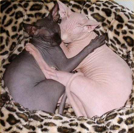 Aww! that makes creepy cats cute!