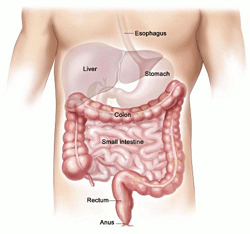 how to survive a colonoscopy