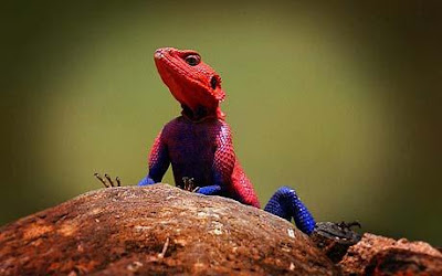 Freaky Stuff - Spiderman Look Alike Lizard 2