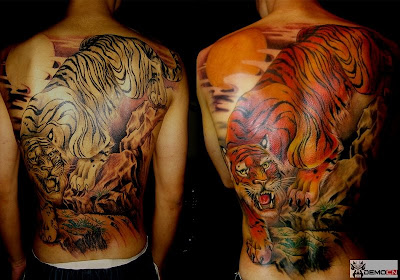 Two phases of a tiger tattoo on the back.