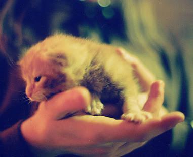 Oliver's kitten Smiffy