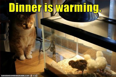 cat looking at chicken under light
