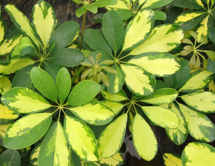 La naturaleza y el ni o rboles de hoja perenne for Arboles frutales de hoja perenne