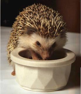 http://1.bp.blogspot.com/_vw71IQa5sxI/SwP5zMNn32I/AAAAAAAAA8o/1221IMG4cuE/s1600/hedgehog3.jpg