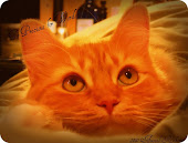 My Kitty Amie