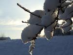neige Normande