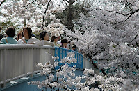 国立市の歩道橋の人ごみと桜