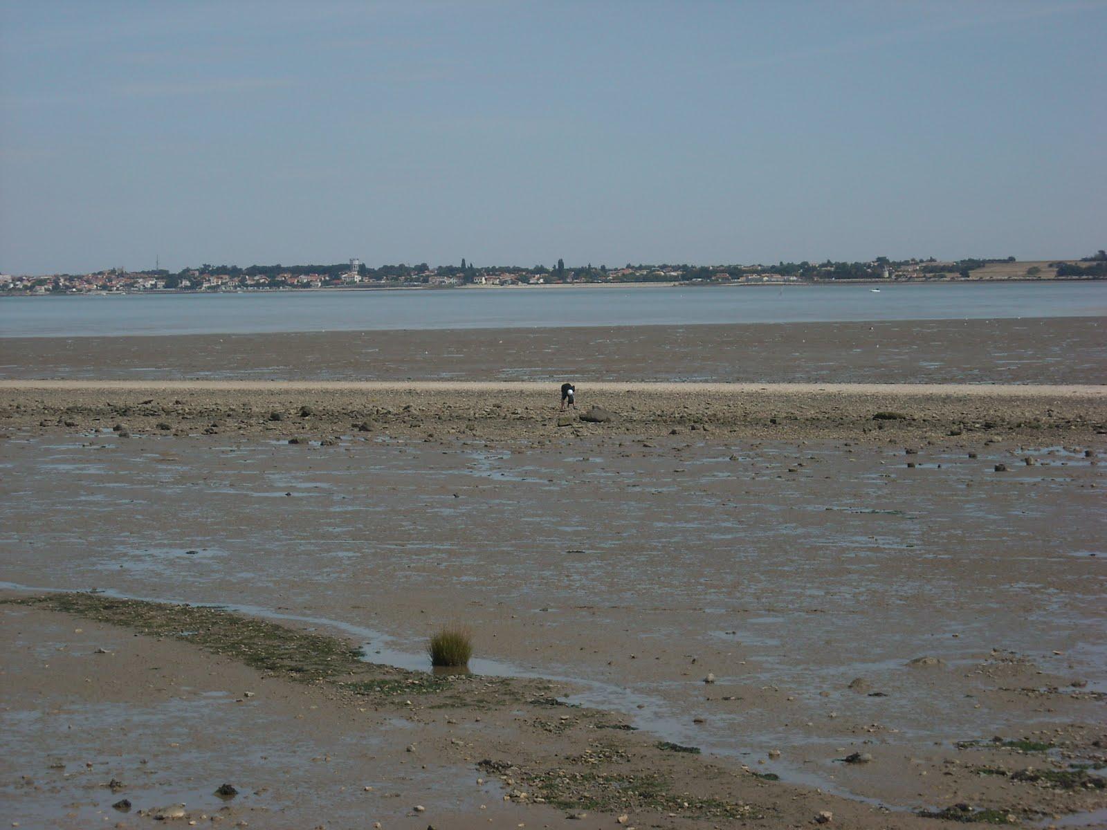les mille pattes de saintonge port des barques en passant par froult charente maritime