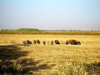 country side Kyrgyzstan