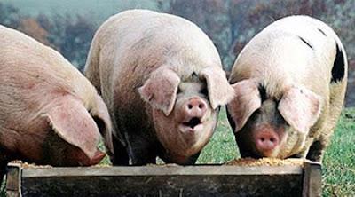 MPs Expenses Pig Trough