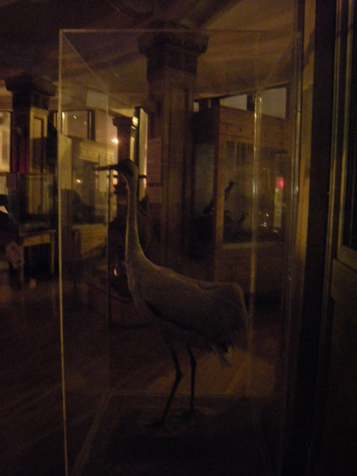 [redpath_night_crane_4x6.jpg]
