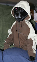 dog dressed in a  hoodie