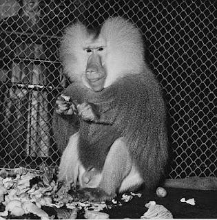 Delegado Juliano Ferreira encontrou um macaco hidráulica e dois sacos de castanhas