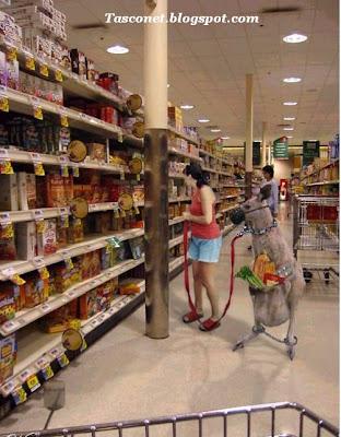 Supermercados na Austrália kangaroo