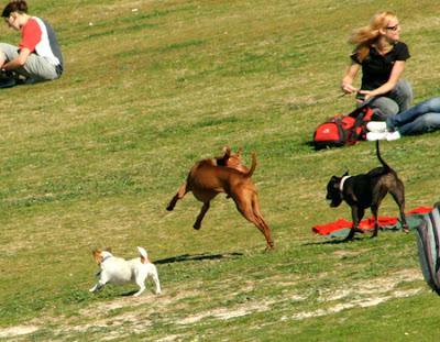 Bondi Beach dogs