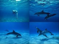 dolphin quarter