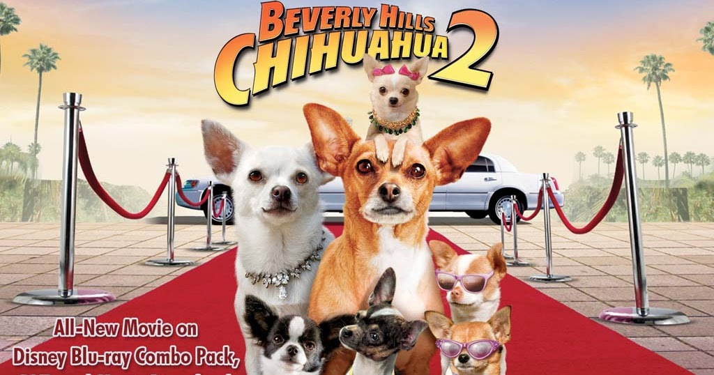 The Legend of Avatar Show: BEVERLY HILLS CHICHUAHUA 2: THE FAMILY ...