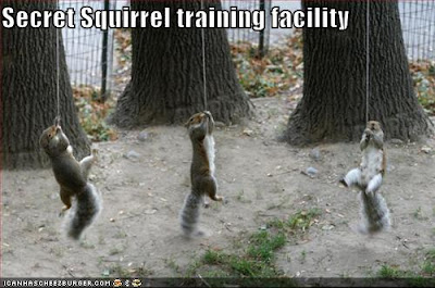 Funny Squirrel Memes - Secret Squirrel Training Facility - via Devastate Boredom