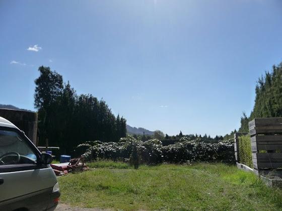 Así se ve el campo del kiwi picking
