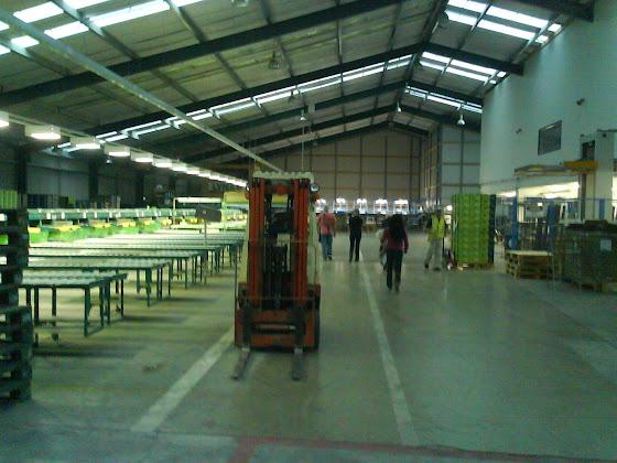 Así se ven de lejos la máquinas del packhouse donde se van los kiwis