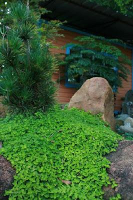 Jardiner a paisajismo cubresuelos - Como plantar cesped en el jardin ...