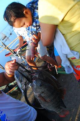 tilapia pla-pla fish