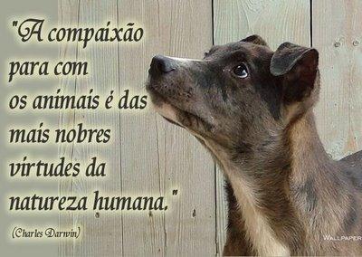 Cachorro - Sao Francisco de Assis