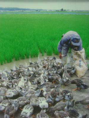 Jurnal Tentang Pertanian Terpadu